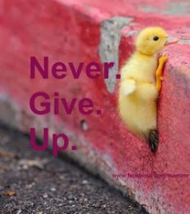 """Never give up!"""